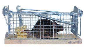 Bekämpfung von Mäusen